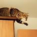 Cat Adventures by fofurasfelinas