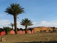 Camelos em Merzouga