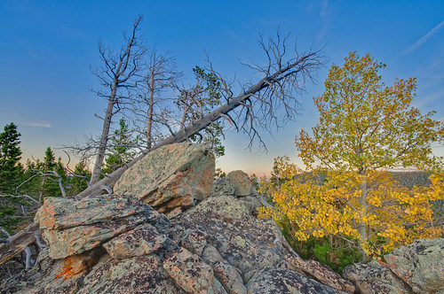 blue trees sunset green fall leaves yellow pine nikon colorado rocks aspen ponderosapine redfeatherlakes d90 deadmanroad