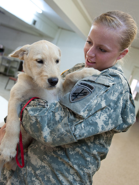 Russian Dog Training Commands