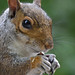 Abney Park Squirrel by smokeghost