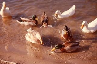 Image de Wards Island Beach. toronto ontario slide torontoislands