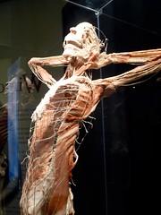 20100429 bodyworlds calgary - 01