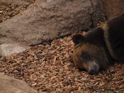 �q�O�}/brown bear