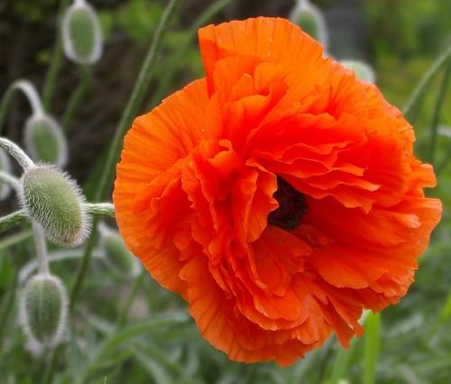 Spanish Flowers Flashcards Quizlet