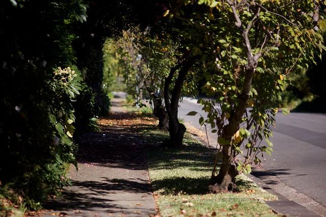 Warrawee path