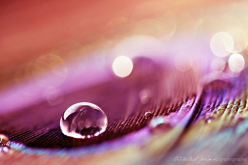 {(pink x [feathers + droplets])^bokeh} = 100% ♥