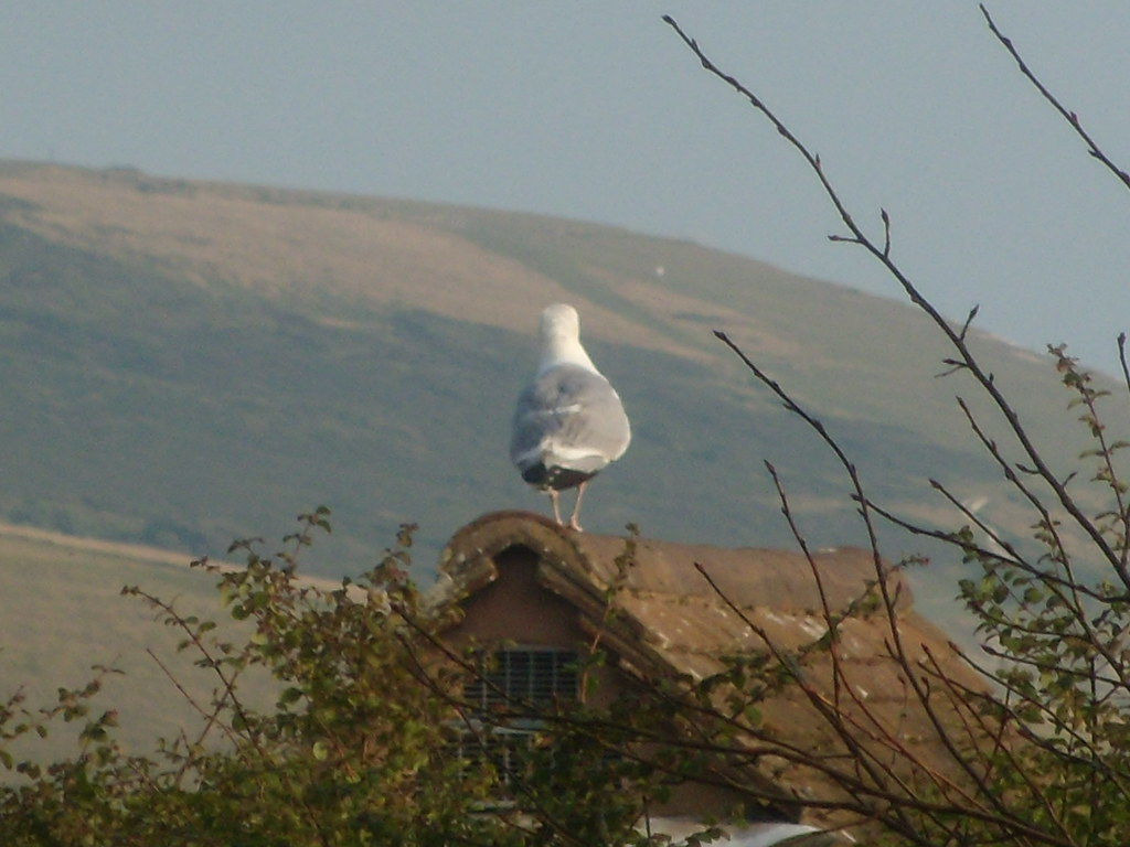 At Exceat Small building, not giant bird, Golden Galleon. Eastbourne to Seaford