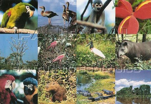 Pantanal Conservation Area (Brazil)