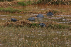 wetland, swamp, fauna, natural environment, wilderness, marsh, bog, wildlife,