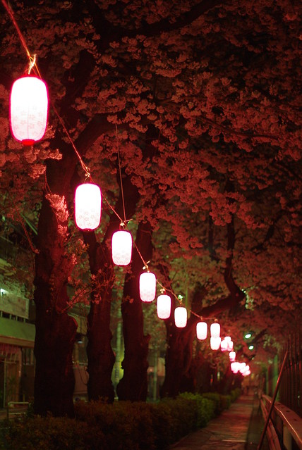 Sakura and Japanese lanterns in the dark