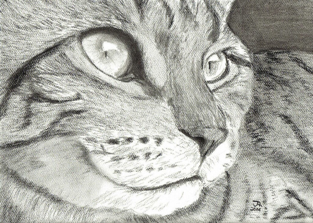 how to draw a tabby cat