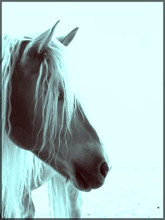 Horse is beautiful