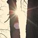 Flare DSC_5405