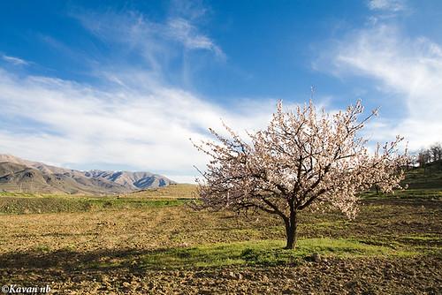 blue sky cloud tree canon landscape spring iran blossom bloom iranian kurdistan sanandaj kavan kordestan sigma1770 400d