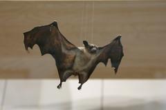 art(0.0), sculpture(0.0), horse(0.0), bat(1.0),
