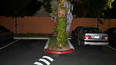 The Stupidest Red Curb In The World