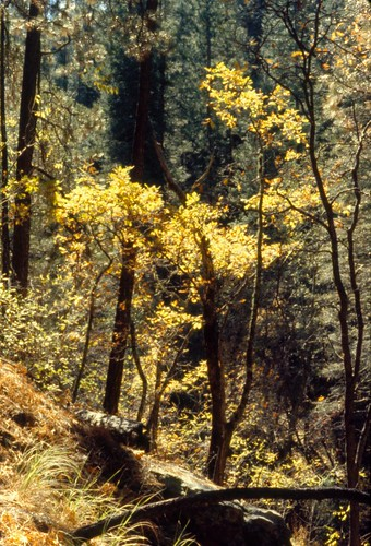 skyislands landscape arizona marshallgulch leaves autumn nature olympusom1 santacatalinamountains santacatalinas riparian riparianzone riparianarea riparianhabitat