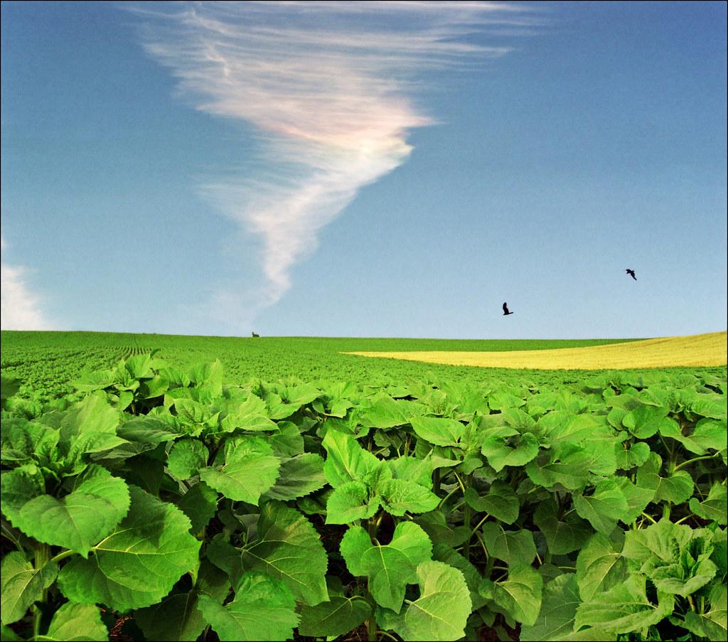 I'll be oil when I grow up..:)))-summer landscape