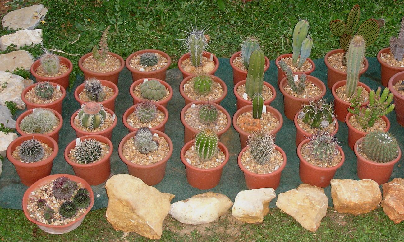 Algunas floraciones de 2009 for Cactus tipos y nombres
