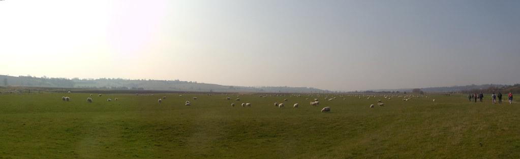 Sheepscape Rye Circular