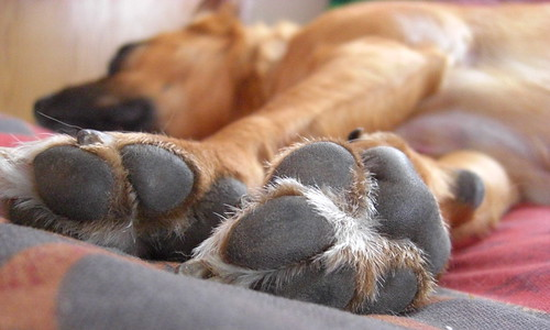 Paws... For A Nap