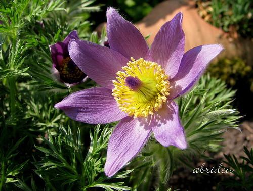 friends canon springflowers floweringplants supershot bej wonderfulworldmix abrideu