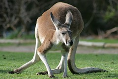 A world of unknown species at Warrawong sanctuary - Things to do in Adelaide
