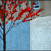 Red Leaves in Autumn Blue