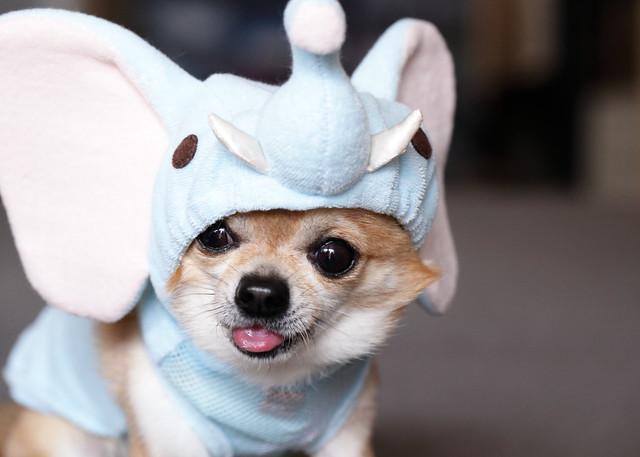 Dumbo Kanon