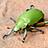 the Biodiversity of Central America / Biodiversidad de Centroamerica group icon