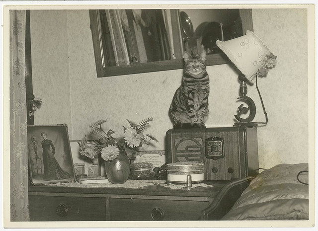 Cat sitting on a radio, Sydney, 1930s / Sam Hood