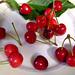 Cherries, june 2004