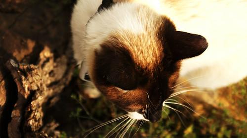 digital cat outdoor bark stump topdown buffy birdseyeview artart