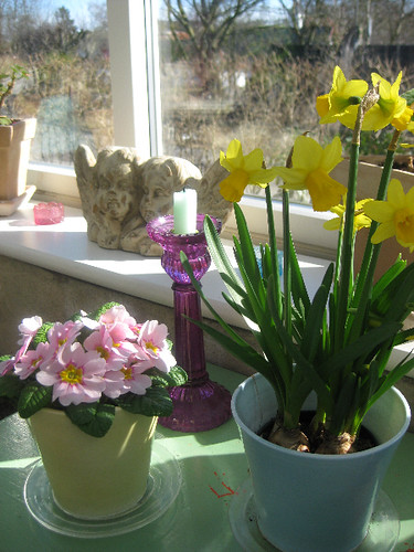 Spring in the conservatory