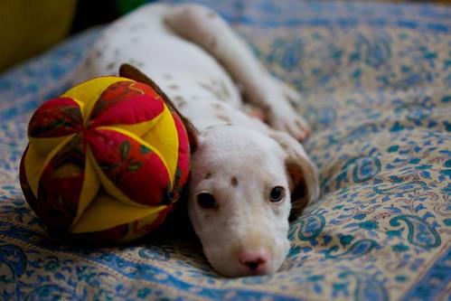 dog india canon dalmation mango handheld 2009 canoneos5dmarkii canonefllens