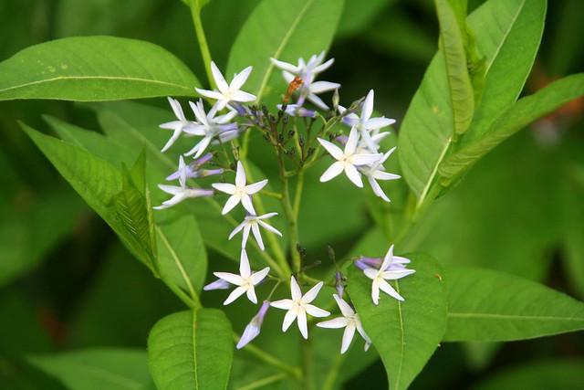 Blue Star – Flower Garden - Bestil rejse til Alanya, Tyrkiet hos