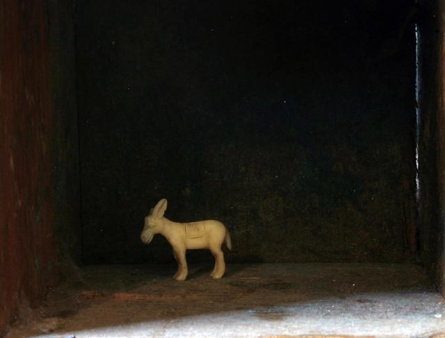 tiny white donkey