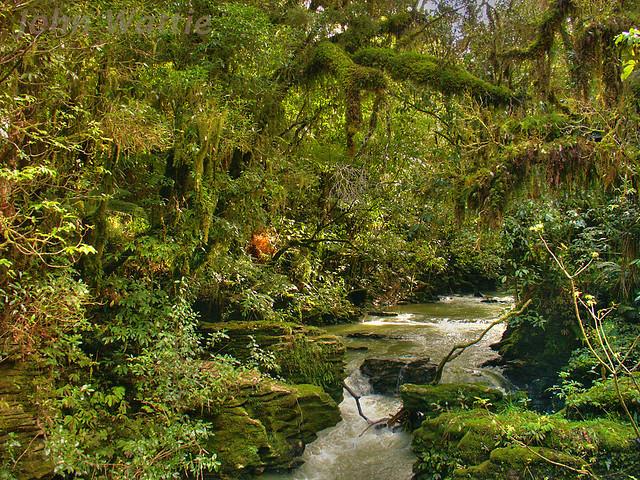 Waitomo River HDR