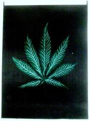 leaf carpeted wall