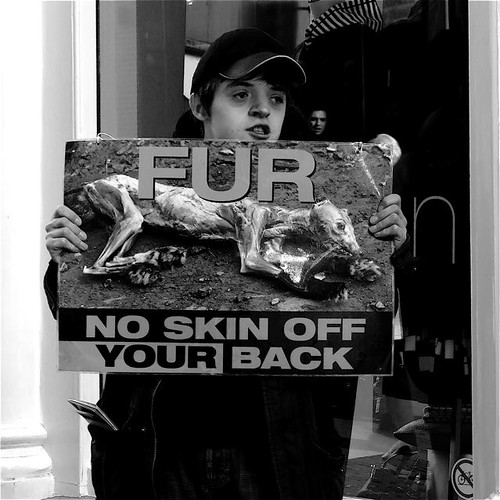 ONLY ANIMALS SHOULD WEAR FUR