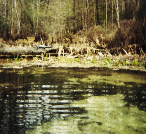 statepark 120 film water river holga log florida alligator portra wakullasprings 400nc