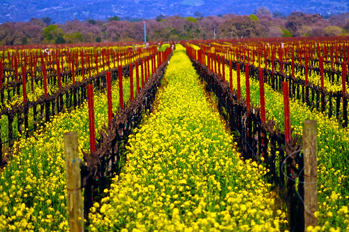 Down the Vines in spring