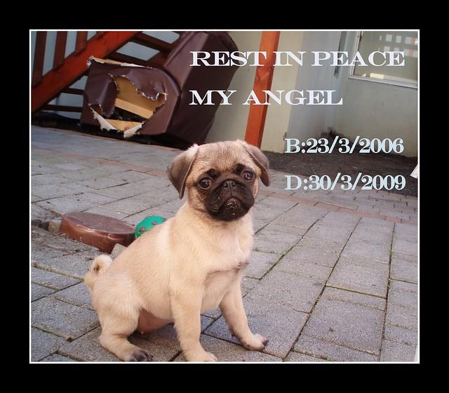 Tag: sweet angel calendar tiny angels photoraphy