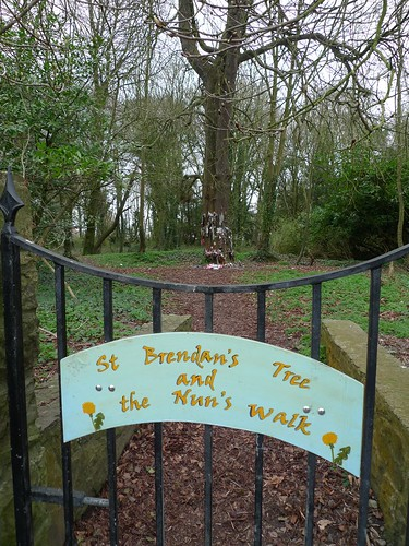 St Brendan's tree and the nun's walk