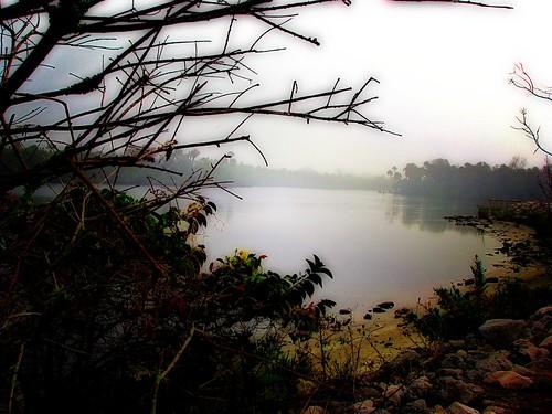 fog river sand rocks riverside fantasy shrubbery orton saintluciecounty saintlucieriver nobleup