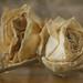 Dried Memories by Tammy Lynn D