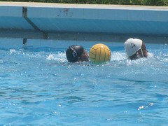 individual sports(0.0), swimmer(0.0), water & ball sports(1.0), water polo(1.0), swimming pool(1.0), swimming(1.0), sports(1.0), recreation(1.0), outdoor recreation(1.0), team sport(1.0), water sport(1.0), ball game(1.0),