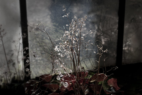 the light of spring comes through the old and dirty window