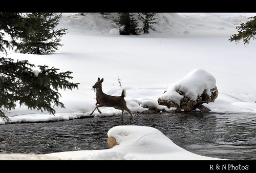winter snow cold tree ice water southdakota spearfishcanyon start nikon stream deer evergreen twig sweep d90 18105vr